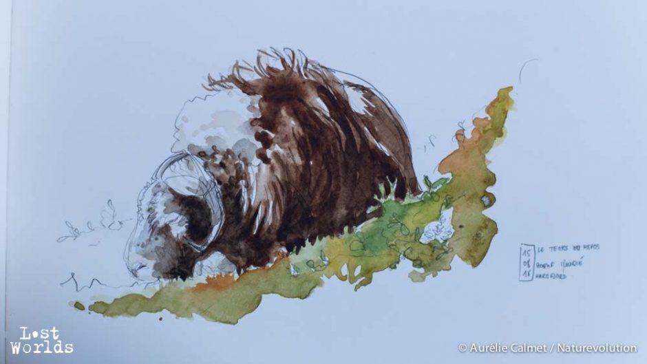 Dessin de boeuf musqué dans le camp d'Harefjord par Auka