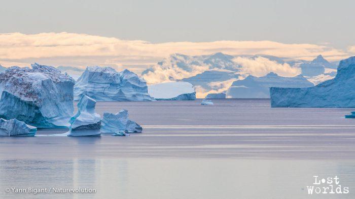 Les eaux du Scoresby, jonchées d'icebergs au couchant.